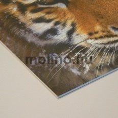Ongrofoam / Habosított PVC tábla nyomtatás